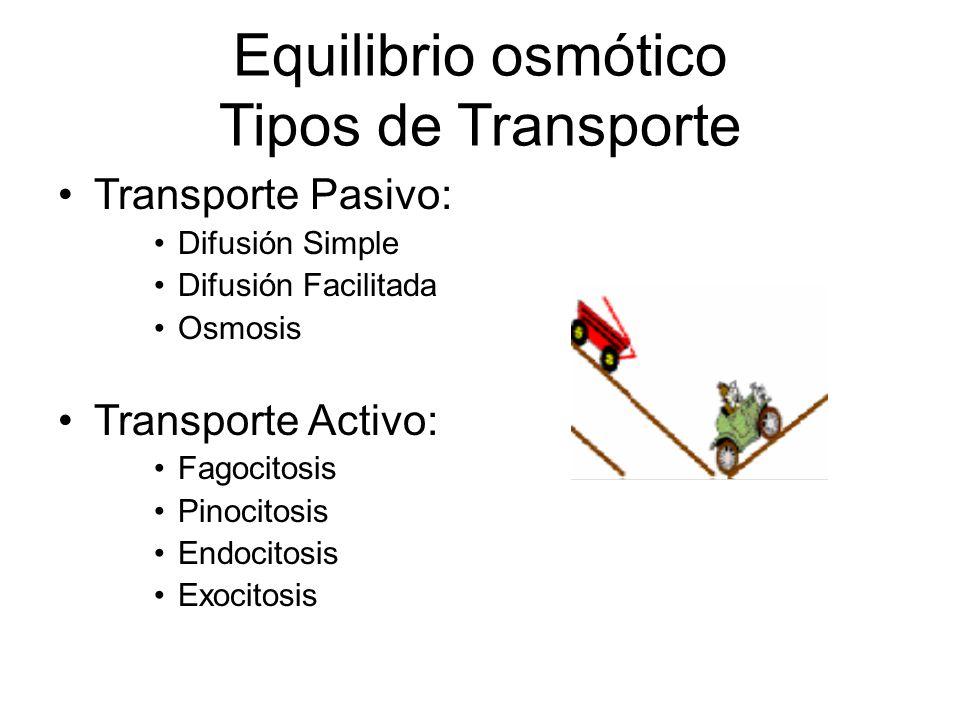 Equilibrio osmótico Tipos de Transporte Transporte Pasivo: Difusión Simple Difusión Facilitada Osmosis Transporte Activo: Fagocitosis Pinocitosis Endo