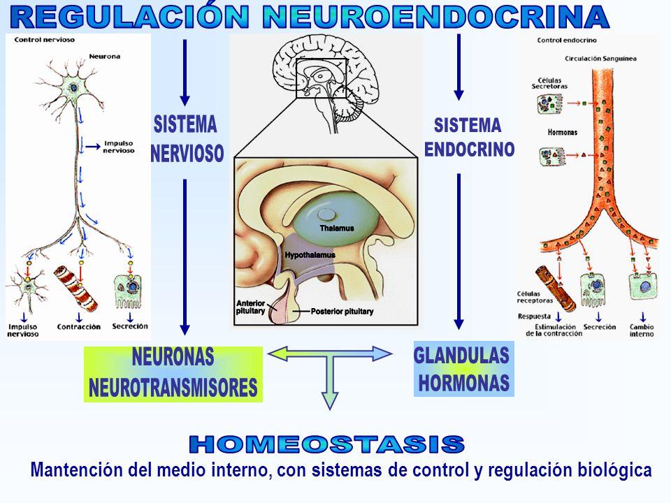 Mantención del medio interno, con sistemas de control y regulación biológica