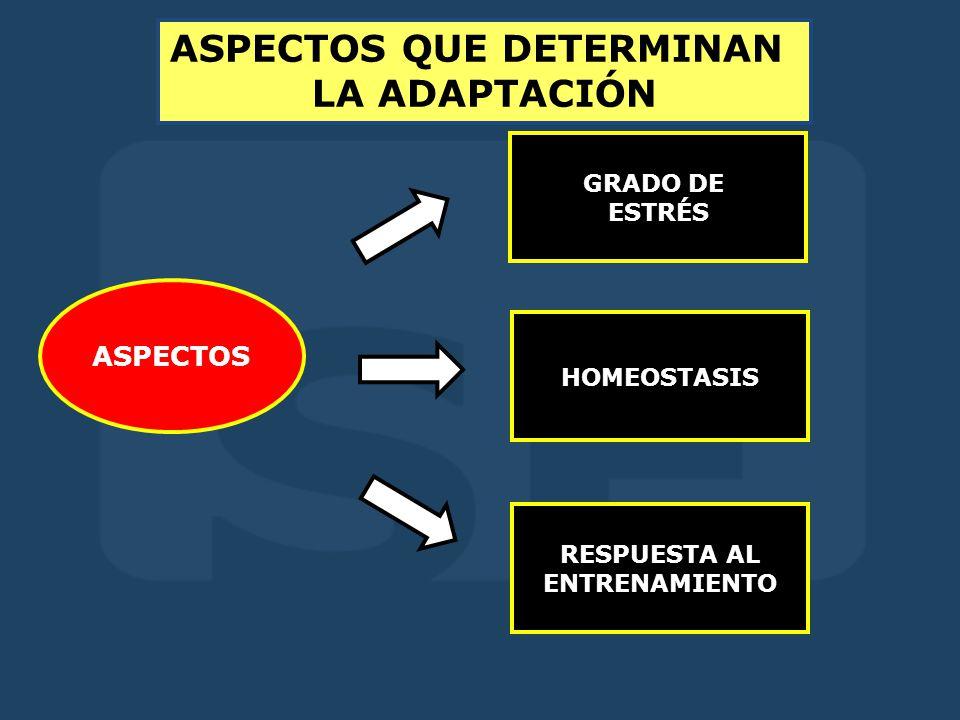 ASPECTOS QUE DETERMINAN LA ADAPTACIÓN ASPECTOS GRADO DE ESTRÉS HOMEOSTASIS RESPUESTA AL ENTRENAMIENTO