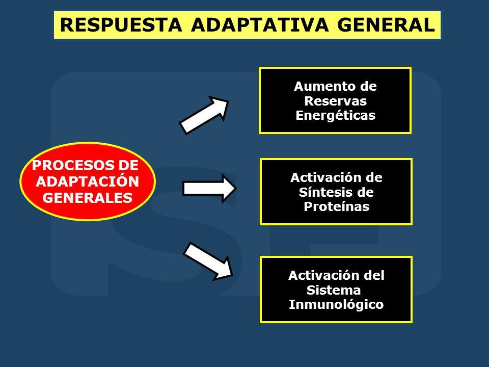 RESPUESTA ADAPTATIVA GENERAL PROCESOS DE ADAPTACIÓN GENERALES Aumento de Reservas Energéticas Activación de Síntesis de Proteínas Activación del Sistema Inmunológico