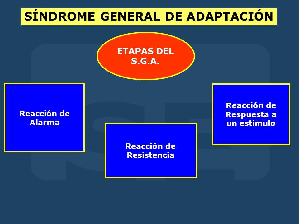 ETAPAS DEL S.G.A.