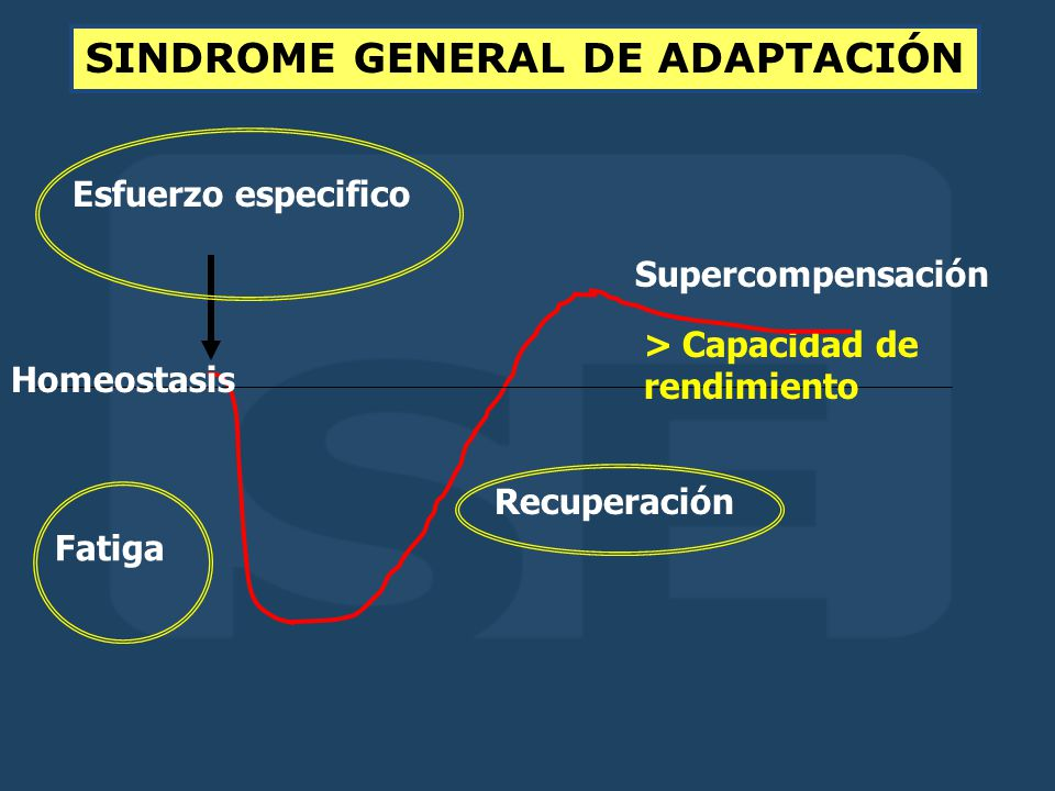 Esfuerzo especifico Fatiga Recuperación Supercompensación Homeostasis > Capacidad de rendimiento SINDROME GENERAL DE ADAPTACIÓN