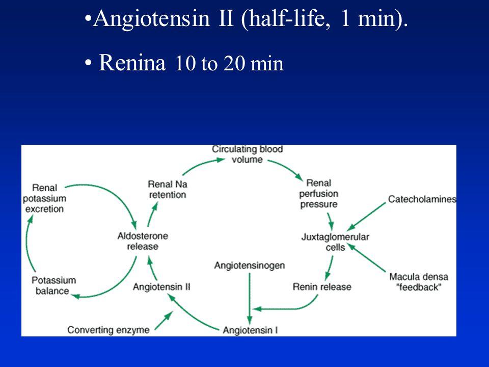 Angiotensin II (half-life, 1 min). Renina 10 to 20 min