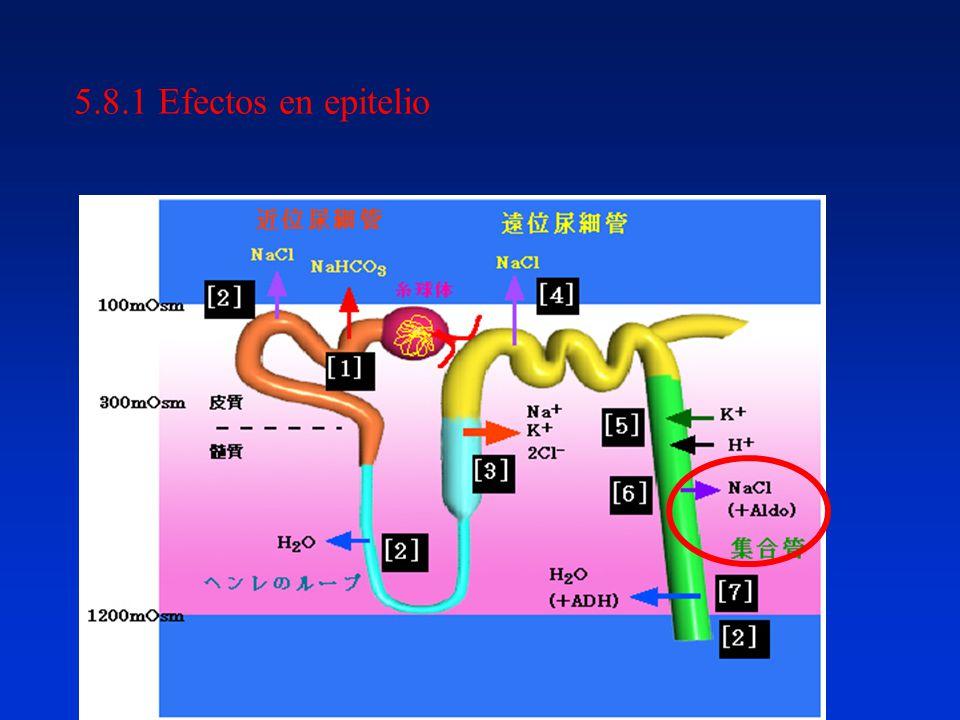 5.8.1 Efectos en epitelio
