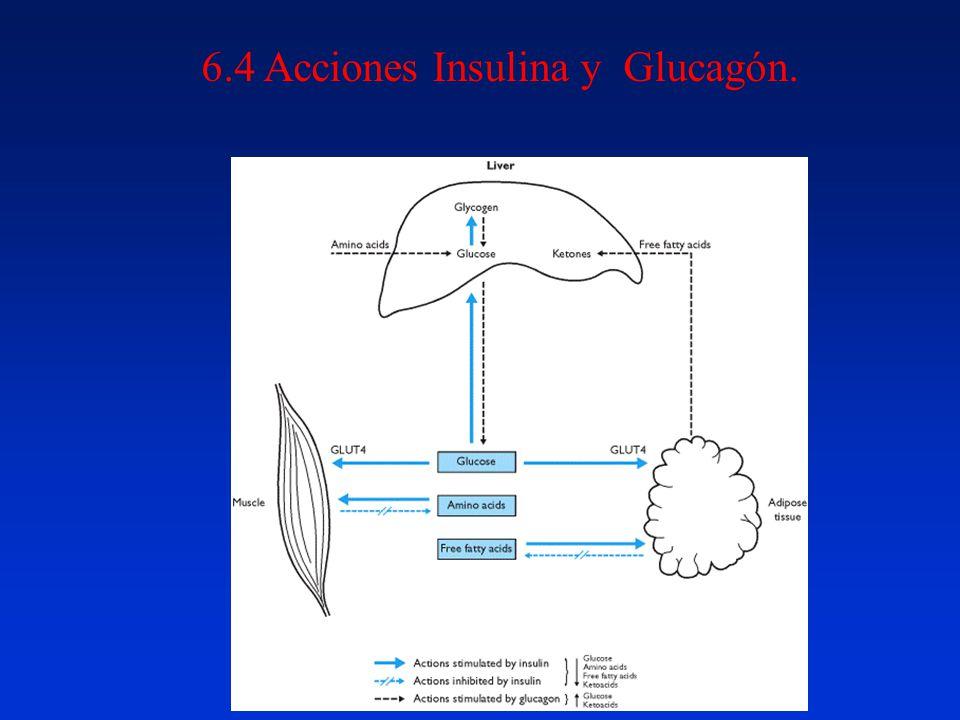 6.4 Acciones Insulina y Glucagón.