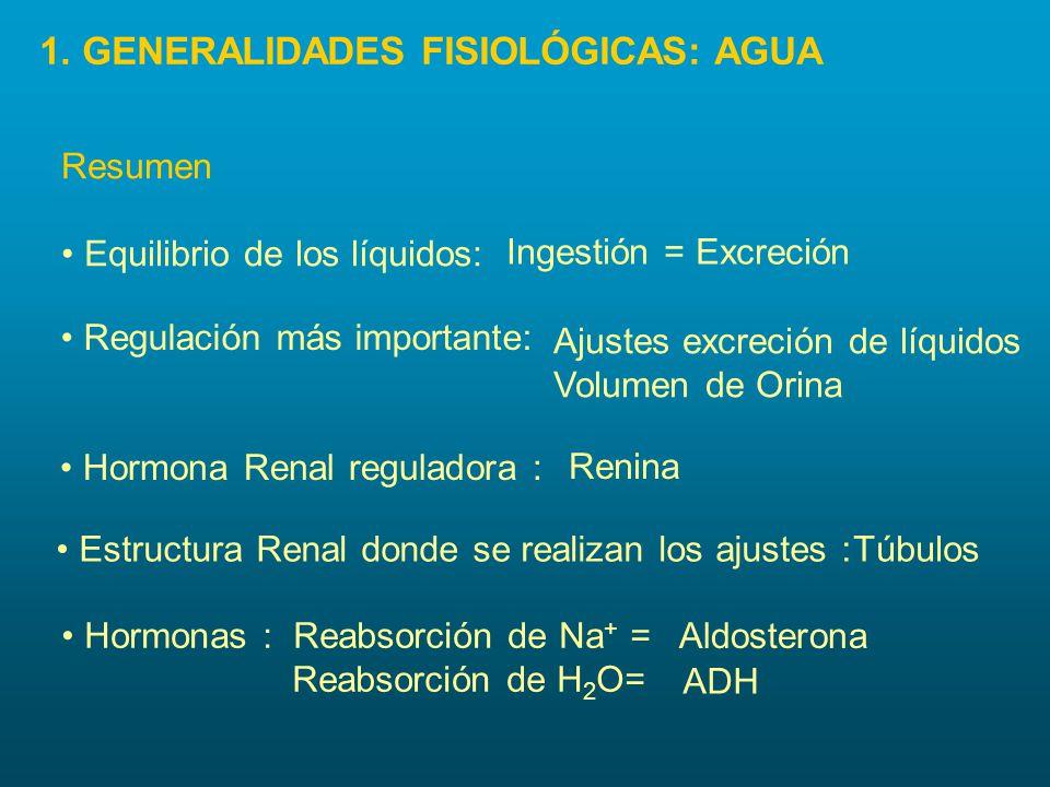 Hormonas : Reabsorción de Na + = Reabsorción de H 2 O= Resumen Ingestión = Excreción Ajustes excreción de líquidos Volumen de Orina Renina Aldosterona