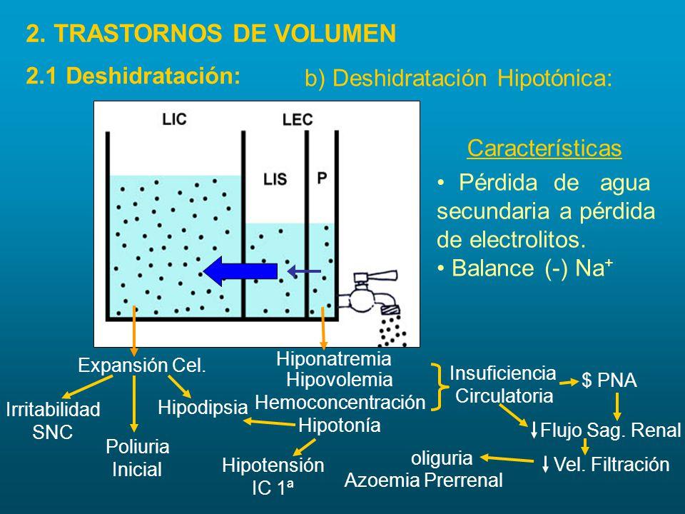 b) Deshidratación Hipotónica: Expansión Cel. Irritabilidad SNC Poliuria Inicial Hipodipsia Hipovolemia Hemoconcentración Hipotonía Hipotensión IC 1ª A