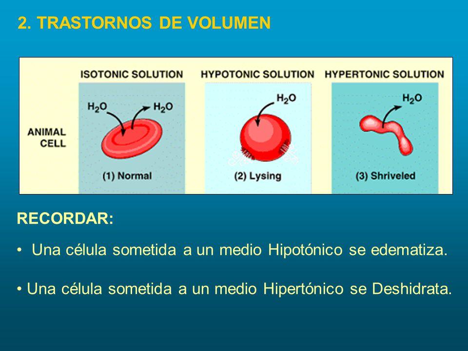 Una célula sometida a un medio Hipotónico se edematiza. Una célula sometida a un medio Hipertónico se Deshidrata. RECORDAR: 2. TRASTORNOS DE VOLUMEN