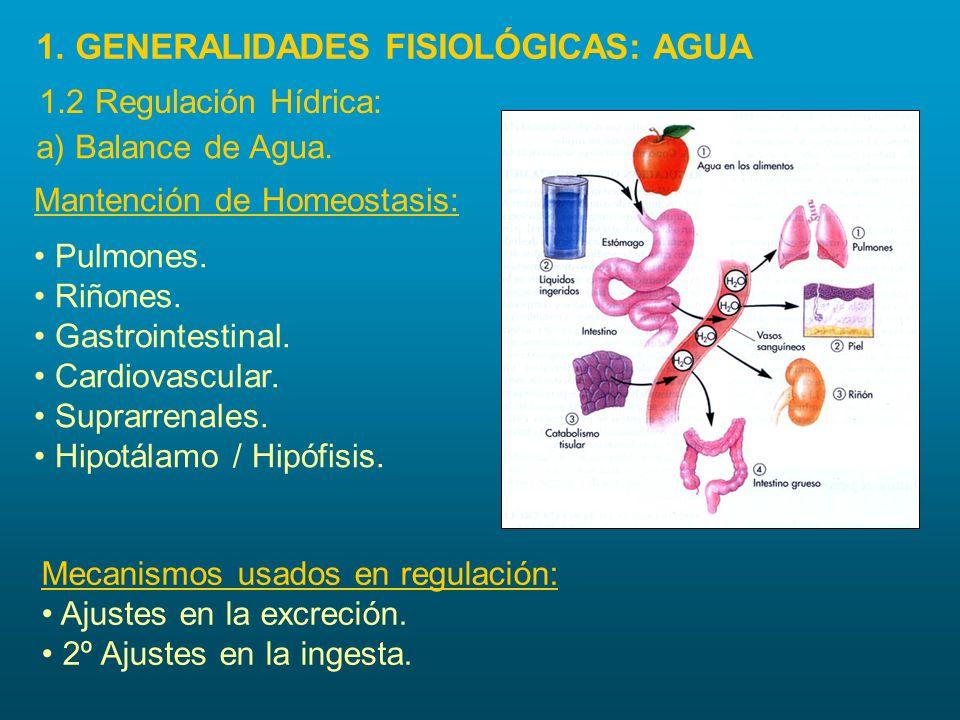 a) Balance de Agua. Pulmones. Riñones. Gastrointestinal. Cardiovascular. Suprarrenales. Hipotálamo / Hipófisis. Mecanismos usados en regulación: Ajust