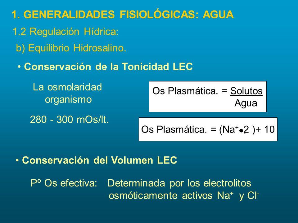 b) Equilibrio Hidrosalino. Conservación de la Tonicidad LEC Conservación del Volumen LEC Pº Os efectiva: Determinada por los electrolitos osmóticament