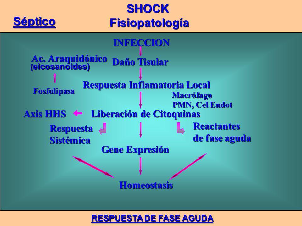 INFECCION INFECCION Daño Tisular Daño Tisular Respuesta Inflamatoria Local Respuesta Inflamatoria Local Liberación de Citoquinas Liberación de Citoquinas Gene Expresión Gene Expresión Homeostasis Homeostasis Ac.