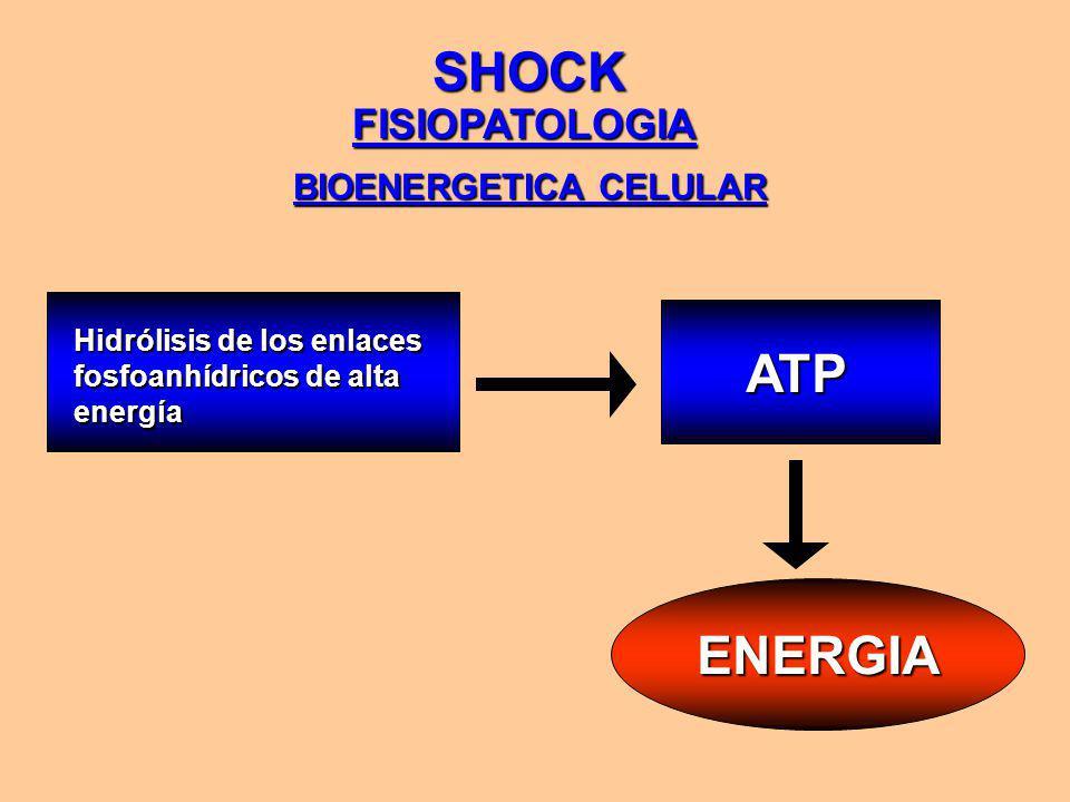 SHOCK FISIOPATOLOGIA BIOENERGETICA CELULAR ENERGIA Hidrólisis de los enlaces fosfoanhídricos de alta energía ATP