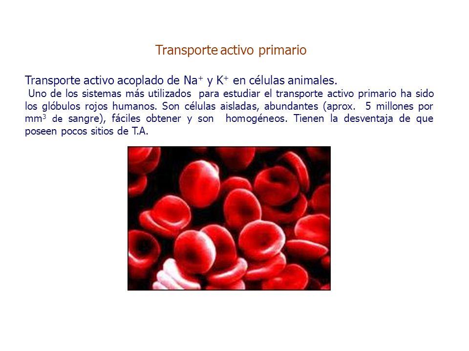 Transporte activo primario Transporte activo acoplado de Na + y K + en células animales.