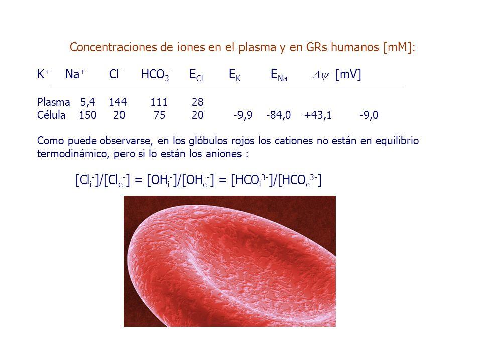 Concentraciones de iones en el plasma y en GRs humanos [mM]: K + Na + Cl - HCO 3 - E Cl E K E Na  [mV] Plasma 5,4 144 111 28 Célula 150 20 75 20 -9,9 -84,0 +43,1 -9,0 Como puede observarse, en los glóbulos rojos los cationes no están en equilibrio termodinámico, pero si lo están los aniones : [Cl i - ]/[Cl e - ] = [OH i - ]/[OH e - ] = [HCO i 3- ]/[HCO e 3- ]