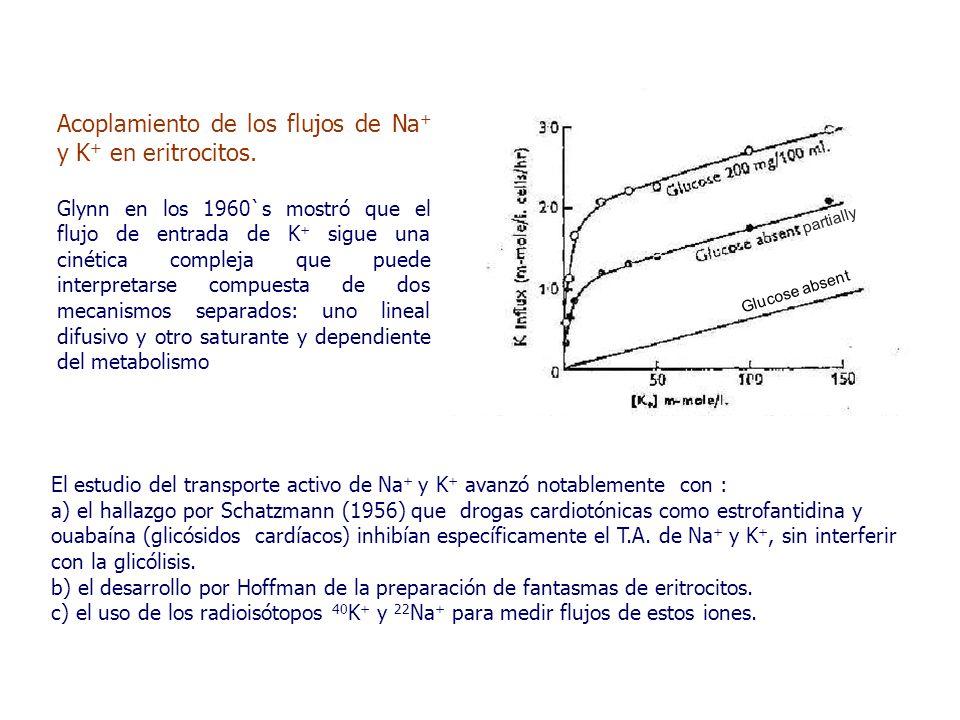 El estudio del transporte activo de Na + y K + avanzó notablemente con : a) el hallazgo por Schatzmann (1956) que drogas cardiotónicas como estrofantidina y ouabaína (glicósidos cardíacos) inhibían específicamente el T.A.