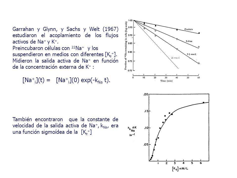 Garrahan y Glynn, y Sachs y Welt (1967) estudiaron el acoplamiento de los flujos activos de Na + y K +.