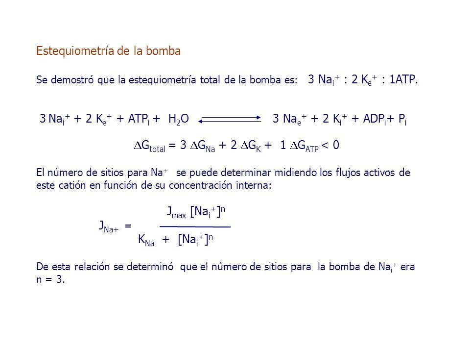 Estequiometría de la bomba Se demostró que la estequiometría total de la bomba es: 3 Na i + : 2 K e + : 1ATP.