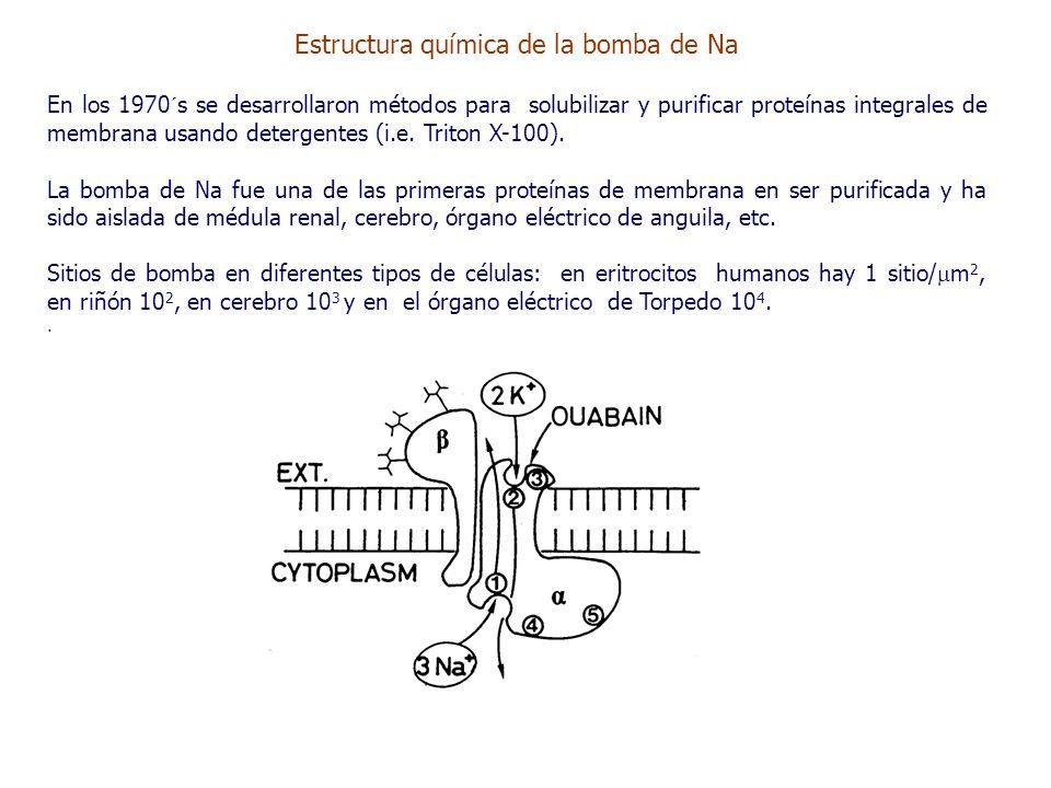 Estructura química de la bomba de Na En los 1970´s se desarrollaron métodos para solubilizar y purificar proteínas integrales de membrana usando detergentes (i.e.