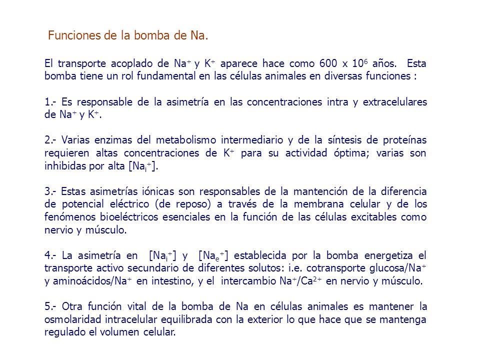 Funciones de la bomba de Na.