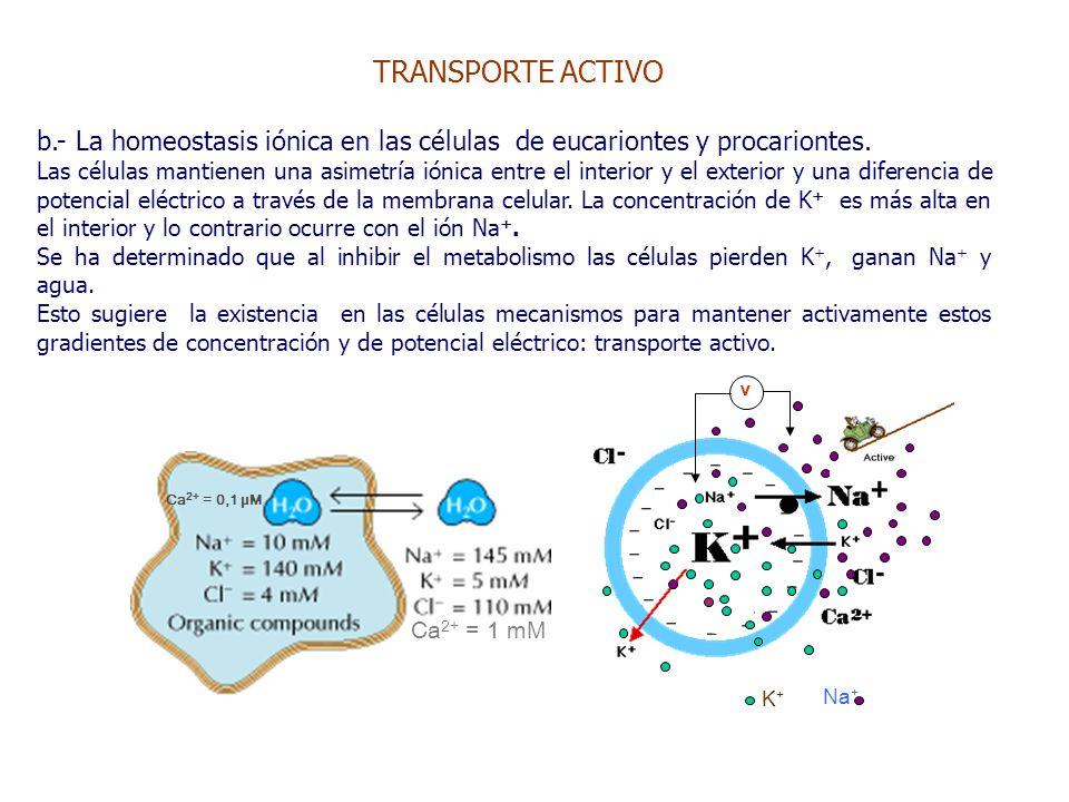 TRANSPORTE ACTIVO b.- La homeostasis iónica en las células de eucariontes y procariontes.