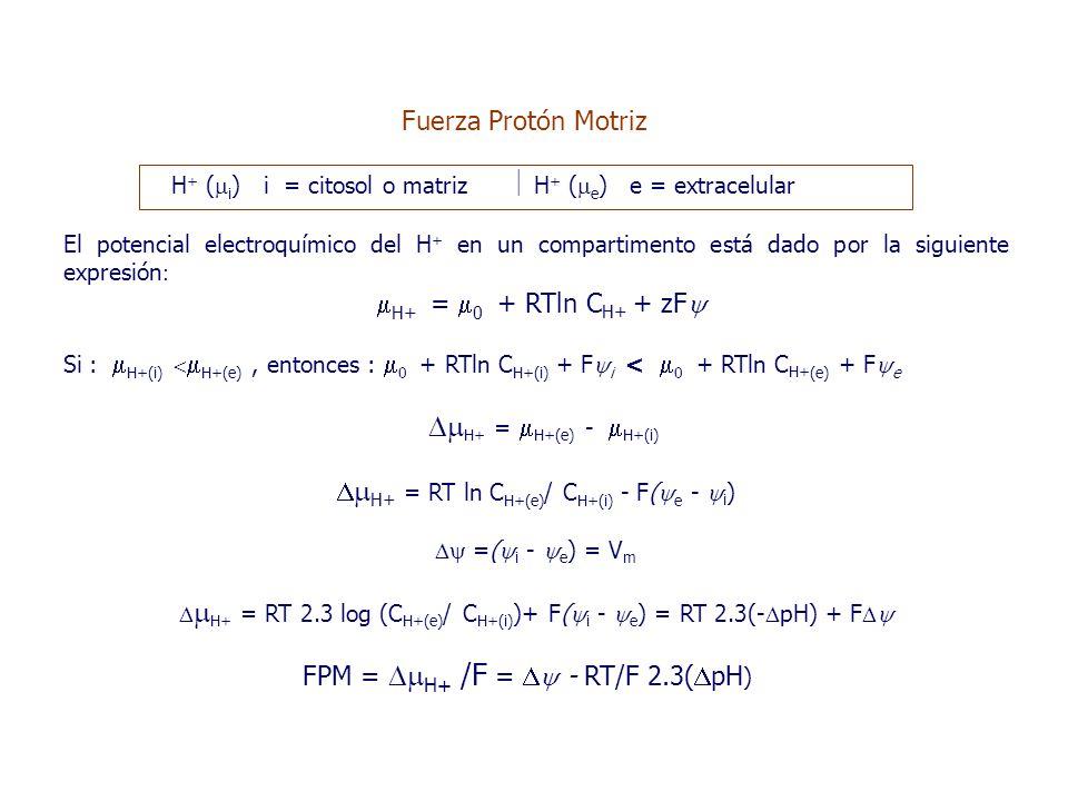 H + (  i ) i = citosol o matriz  H + (  e ) e = extracelular El potencial electroquímico del H + en un compartimento está dado por la siguiente expresión :  H+ =  0 + RTln C H+ + zF  Si :  H+(i)   H+(e), entonces :  0 + RTln C H+(i) + F  i <  0 + RTln C H+ (e) + F  e  H+ =  H+(e) -  H+(i)   H+ = RT ln C H+(e) / C H+(i) - F(  e -  i )  =(  i -  e ) = V m   H+ = RT 2.3 log (C H+(e) / C H+(i) )+ F(  i -  e ) = RT 2.3(-  pH) + F  FPM =  H+ /F =  - RT/F 2.3(  pH ) Fuerza Protón Motriz