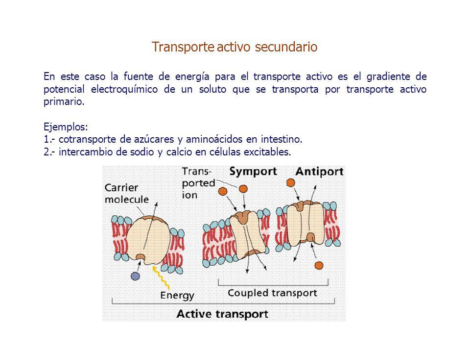 Transporte activo secundario En este caso la fuente de energía para el transporte activo es el gradiente de potencial electroquímico de un soluto que se transporta por transporte activo primario.