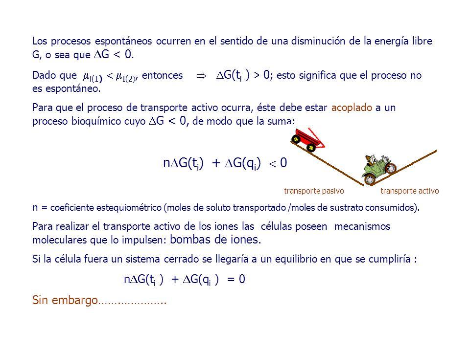 Los procesos espontáneos ocurren en el sentido de una disminución de la energía libre G, o sea que  G < 0.