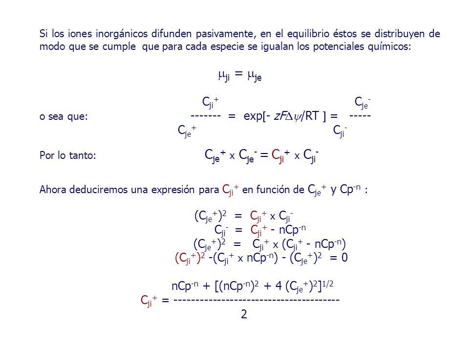 Si los iones inorgánicos difunden pasivamente, en el equilibrio éstos se distribuyen de modo que se cumple que para cada especie se igualan los potenciales químicos:  ji =  je C ji + C je - o sea que: ------- = exp  - zF  /RT  = ----- C je + C ji - Por lo tanto: C j e + x C je - = C ji + x C ji - Ahora deduciremos una expresión para C ji + en función de C je + y Cp -n : (C je + ) 2 = C ji + x C ji - C ji - = C ji + - nCp -n (C je + ) 2 = C ji + x (C ji + - nCp -n ) (C ji + ) 2 -(C ji + x nCp -n ) - (C je + ) 2 = 0 nCp -n + [(nCp -n ) 2 + 4 (C je + ) 2 ] 1/2 C ji + = --------------------------------------- 2