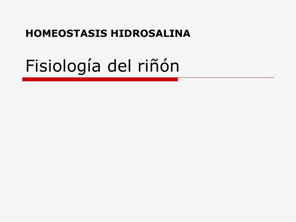 Fisiología del riñón HOMEOSTASIS HIDROSALINA