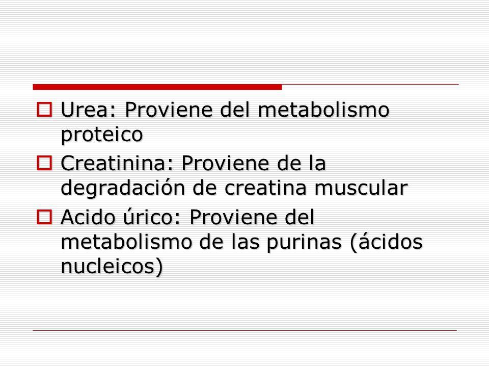  Urea: Proviene del metabolismo proteico  Creatinina: Proviene de la degradación de creatina muscular  Acido úrico: Proviene del metabolismo de las