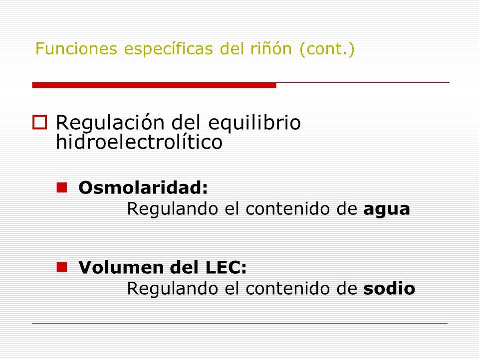 Funciones específicas del riñón (cont.)  Regulación del equilibrio hidroelectrolítico Osmolaridad: Regulando el contenido de agua Volumen del LEC: Re