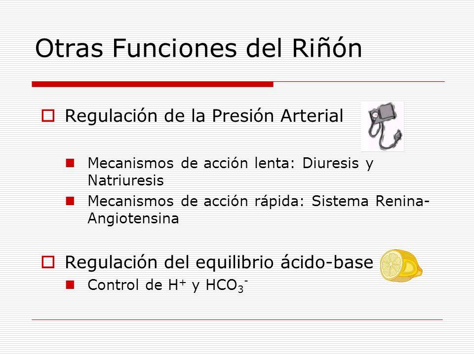 Otras Funciones del Riñón  Regulación de la Presión Arterial Mecanismos de acción lenta: Diuresis y Natriuresis Mecanismos de acción rápida: Sistema