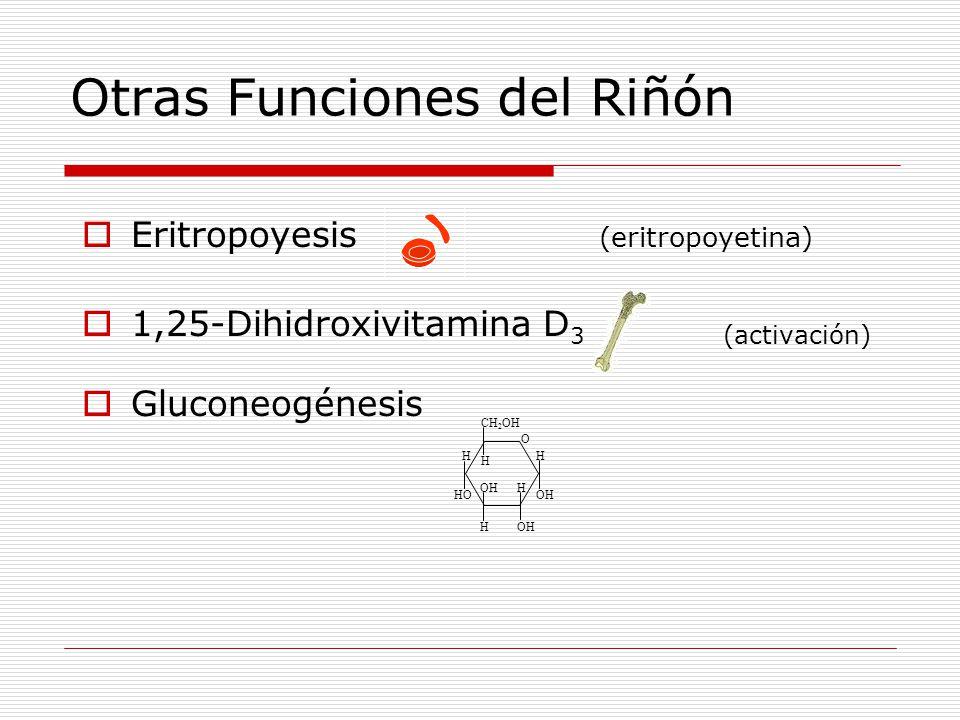 Otras Funciones del Riñón  Eritropoyesis (eritropoyetina)  1,25-Dihidroxivitamina D 3 (activación)  Gluconeogénesis O OH HO CH 2 OH H H H H H
