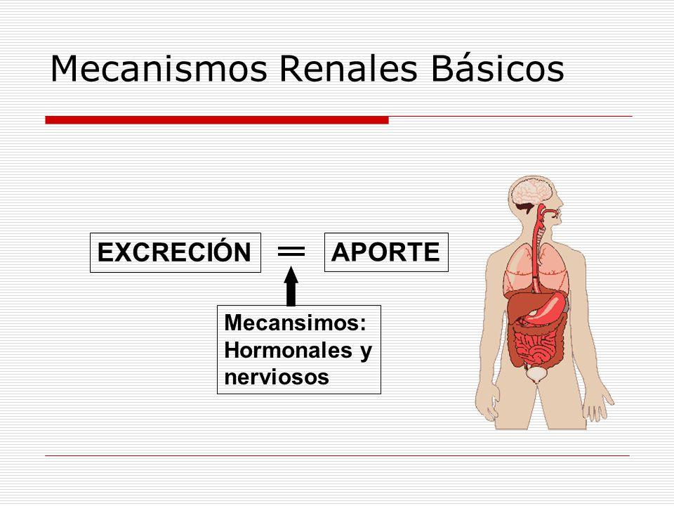 Mecanismos Renales Básicos EXCRECIÓN APORTE Mecansimos: Hormonales y nerviosos
