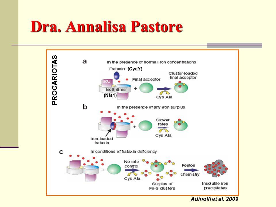 Adinolfi et al. 2009 (CyaY) Dra. Annalisa Pastore PROCARIOTAS (Nfs1)