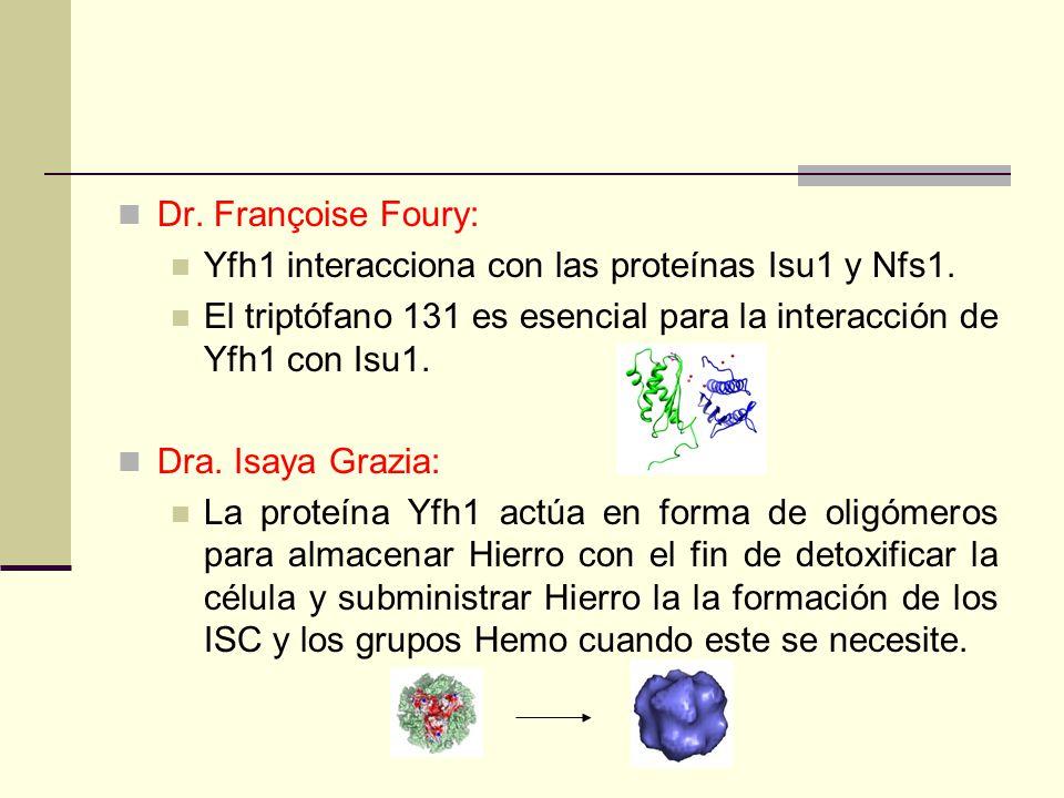 Dr. Françoise Foury: Yfh1 interacciona con las proteínas Isu1 y Nfs1.