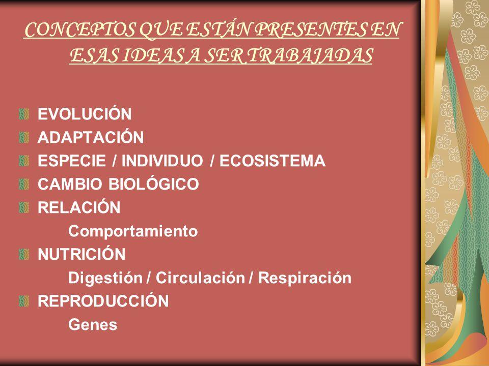 CONCEPTOS QUE ESTÁN PRESENTES EN ESAS IDEAS A SER TRABAJADAS EVOLUCIÓN ADAPTACIÓN ESPECIE / INDIVIDUO / ECOSISTEMA CAMBIO BIOLÓGICO RELACIÓN Comportamiento NUTRICIÓN Digestión / Circulación / Respiración REPRODUCCIÓN Genes