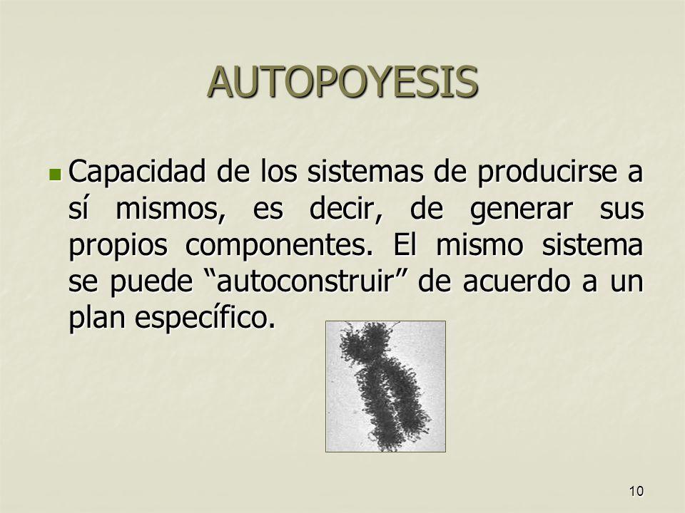 10 AUTOPOYESIS Capacidad de los sistemas de producirse a sí mismos, es decir, de generar sus propios componentes.