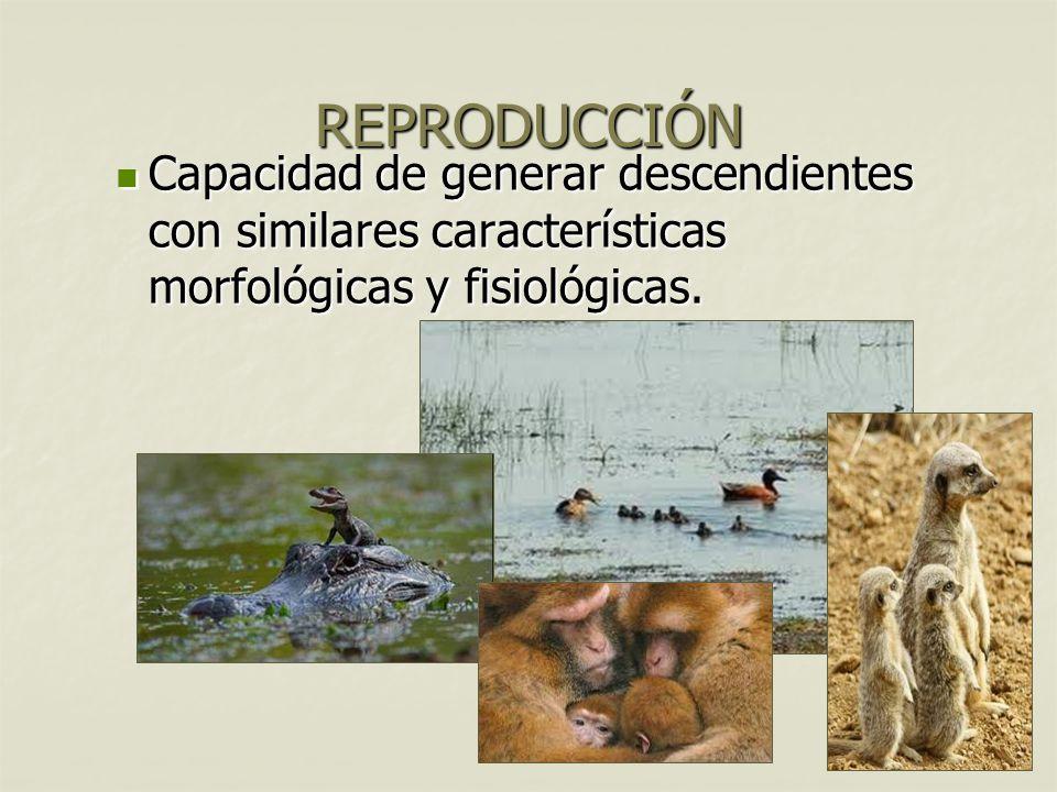 8 Capacidad de generar descendientes con similares características morfológicas y fisiológicas.