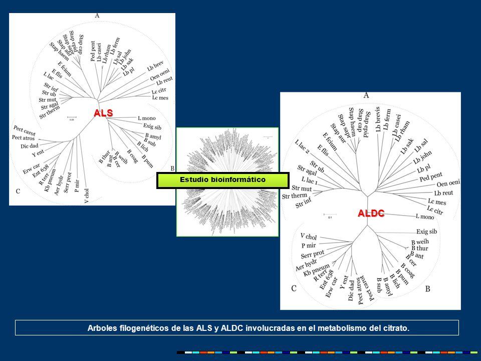 Arboles filogenéticos de las ALS y ALDC involucradas en el metabolismo del citrato.