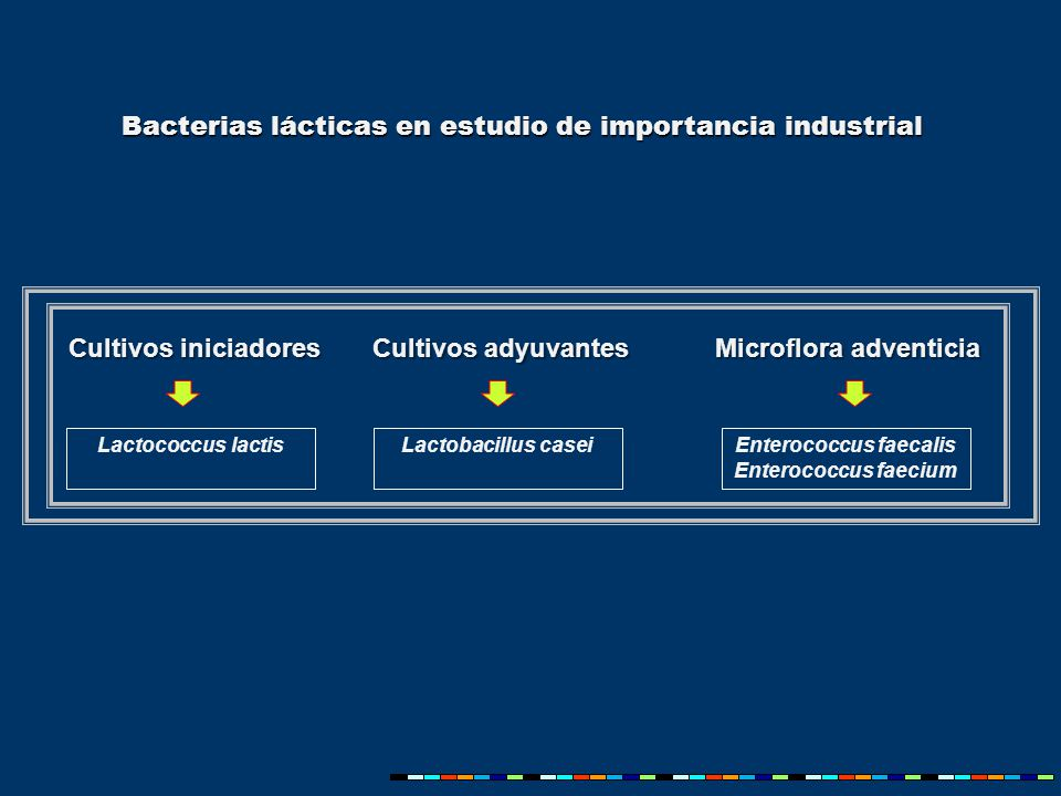 Lactobacillus casei Cultivos iniciadores Cultivos adyuvantes Microflora adventicia Enterococcus faecalis Enterococcus faecium Lactococcus lactis Bacterias lácticas en estudio de importancia industrial