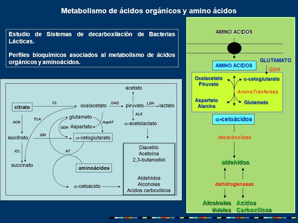 Estudio de Sistemas de decarboxilación de Bacterias Lácticas.