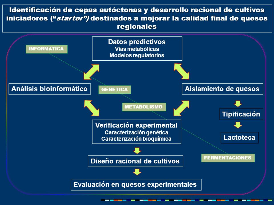 Identificación de cepas autóctonas y desarrollo racional de cultivos iniciadores ( starter ) destinados a mejorar la calidad final de quesos regionales Datos predictivos Vías metabólicas Modelos regulatorios Análisis bioinformáticoAislamiento de quesos Tipificación Diseño racional de cultivos Evaluación en quesos experimentales Lactoteca Verificación experimental Caracterización genética Caracterización bioquímica INFORMATICA FERMENTACIONES METABOLISMO GENETICA