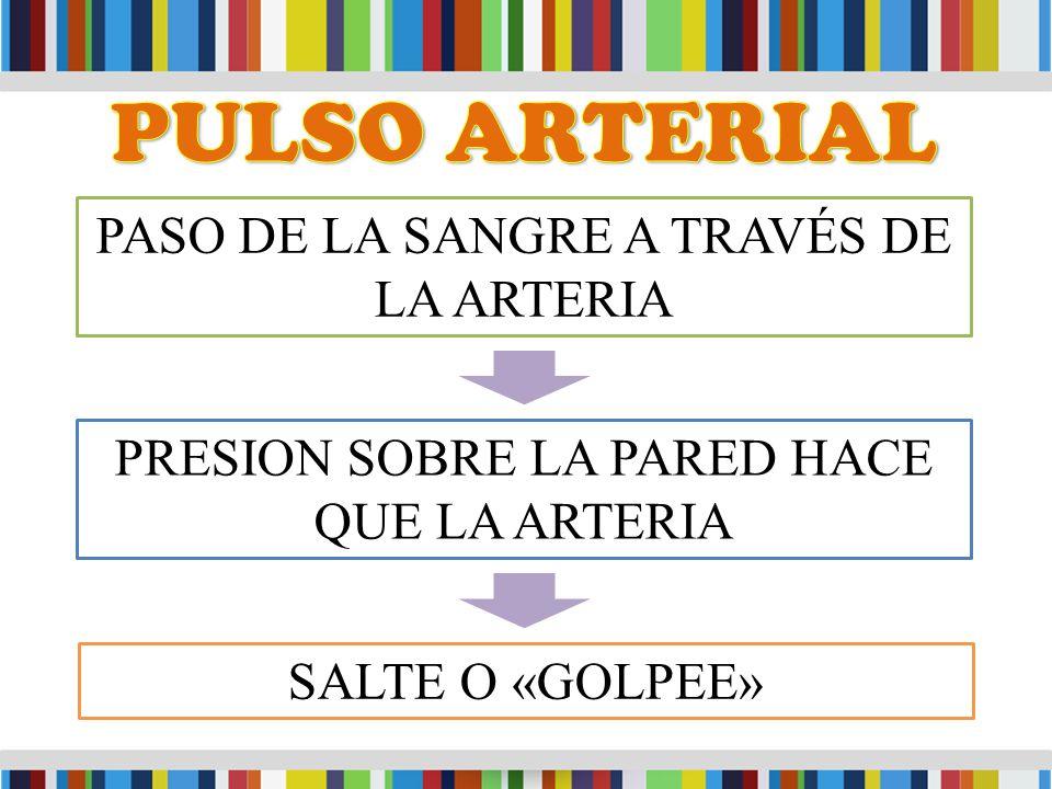 PASO DE LA SANGRE A TRAVÉS DE LA ARTERIA PRESION SOBRE LA PARED HACE QUE LA ARTERIA SALTE O «GOLPEE»