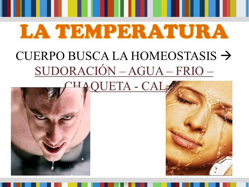 CUERPO BUSCA LA HOMEOSTASIS  SUDORACIÓN – AGUA – FRIO – CHAQUETA - CALOR