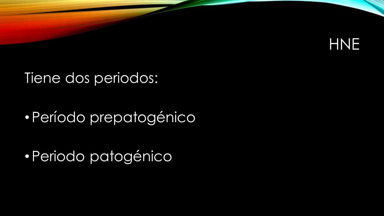 HNE Tiene dos periodos: Período prepatogénico Periodo patogénico