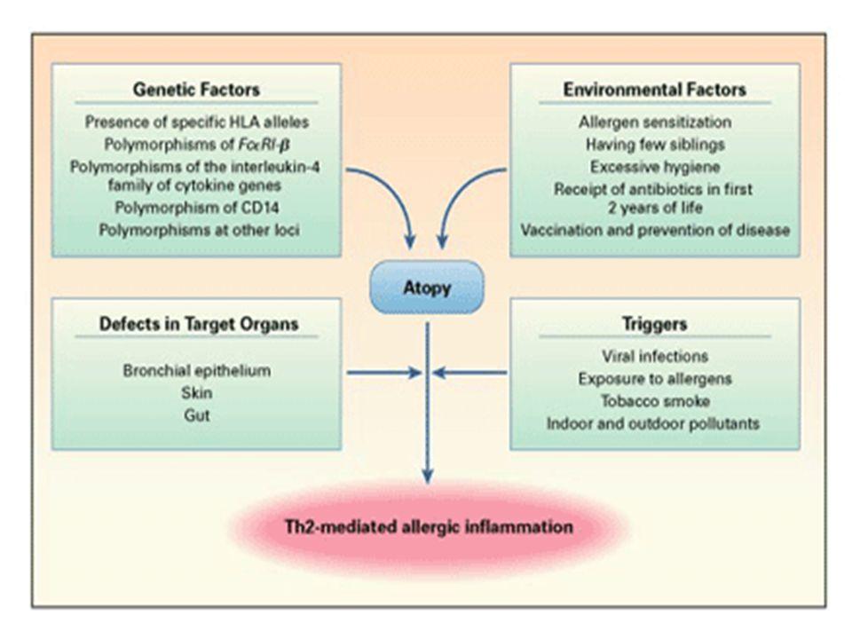 Reacción alérgica a fármacos Reacción mediada por el sistema inmunitario Producción de anticuerpos o linfocitos específicos frente al fármaco Una verdadera alergia a un fármaco requiere una exposición previa (sensibilización)
