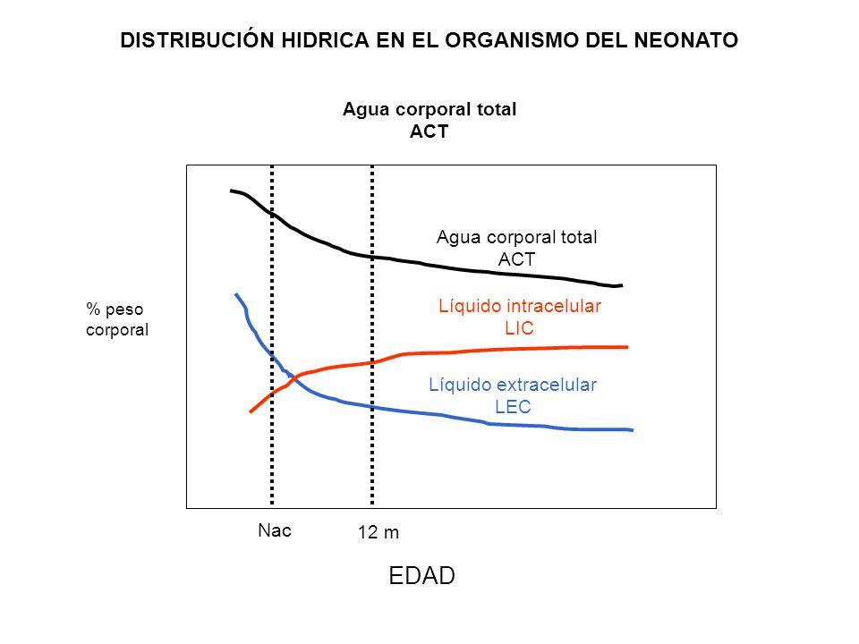DISTRIBUCIÓN HIDRICA EN EL ORGANISMO DEL NEONATO Agua corporal total ACT EDAD Agua corporal total ACT Líquido intracelular LIC Líquido extracelular LE