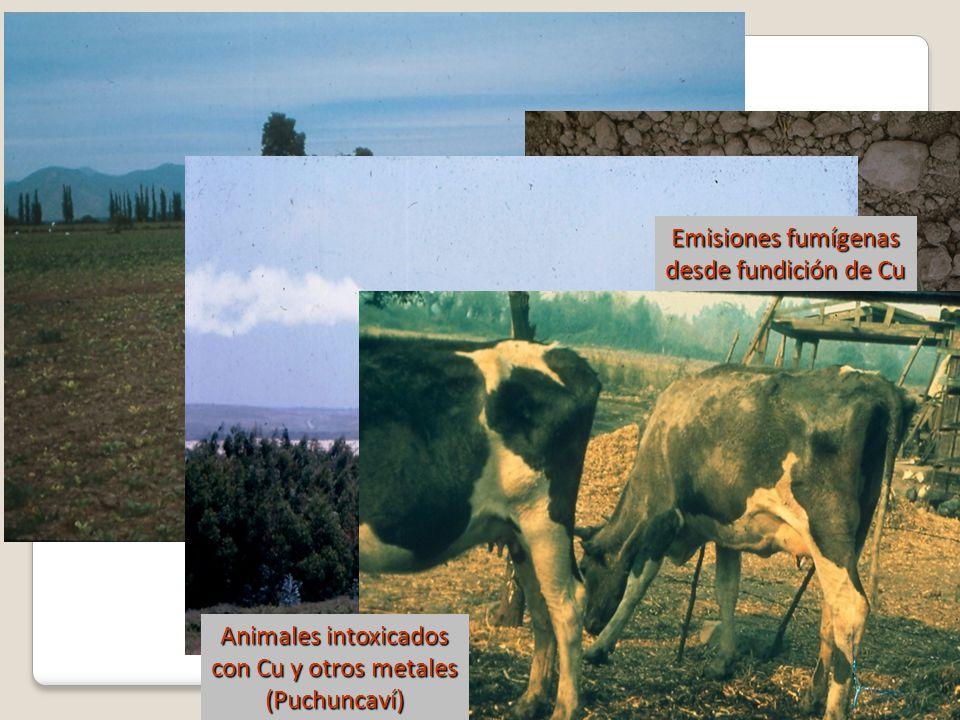 Toxicidad por cobre(Cachapoal) Emisiones fumígenas desde fundición de Cu (Puchuncaví) Animales intoxicados con Cu y otros metales (Puchuncaví)