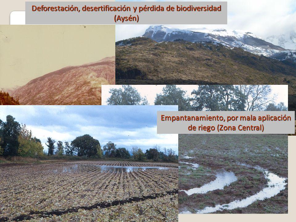 Empantanamiento, por mala aplicación de riego (Zona Central) Deforestación, desertificación y pérdida de biodiversidad (Aysén)